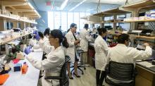 At work in the Hecker Lab.